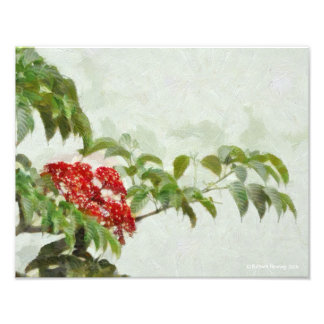117 BRANCH OF RED AND GREEN PHOTOGRAPHIC PRINT