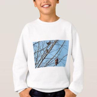 11 23 2008 021, Sparrows&Male Cardinal 2 Sweatshirt