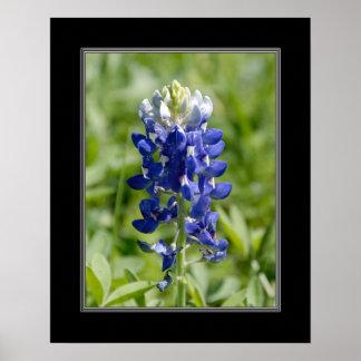 16x20 Texas Blubonnet Flower Poster