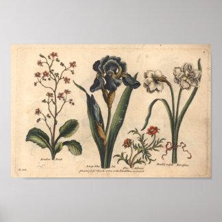1757 Botanical Flower Art Print Blue Iris