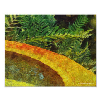 188 ROUND FOUNTAIN AND FERNS PHOTO