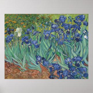 28 x 36, Irises by Vincent van Gogh, 1889 Poster