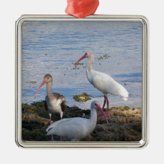 3 Ibis on the shore of Florida Bay Christmas Ornament