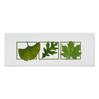 3 leaves poster