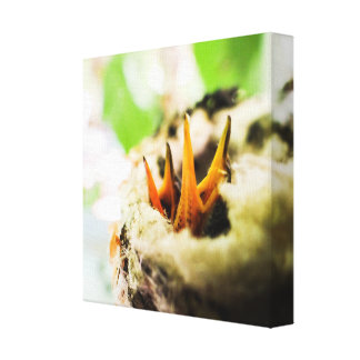 6 Day Old Rufous Hummingbird Babies Canvas Prints