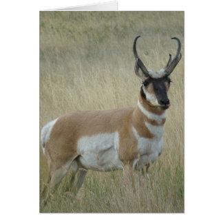 A0009 Pronghorn Antelope Buck Card