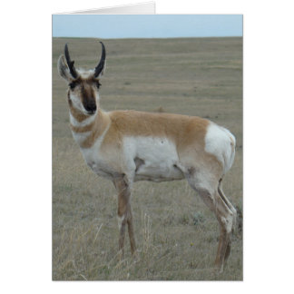 A0028 Pronghorn Antelope Young Buck Card