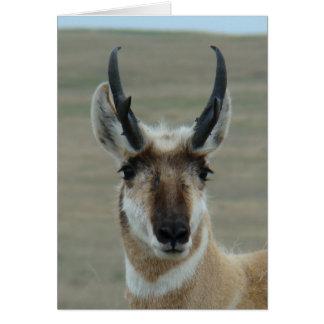 A0030 Pronghorn Antelope Head Card