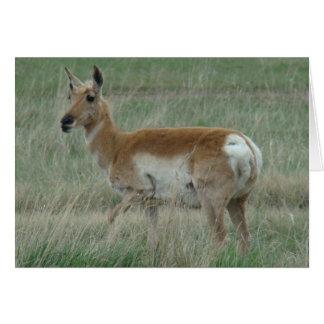 A0031 Pronghorn Antelope Card