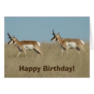 A0045 Pronghorn Antelope Bucks Card