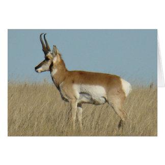 A0046 Pronghorn Antelope Card