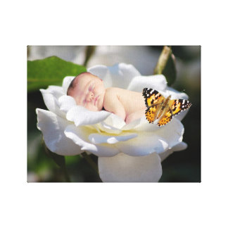A baby and white rose stretched canvas print