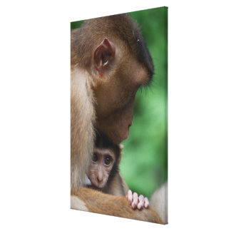 A Baby Macaque And It'S Mother Canvas Print