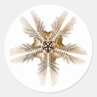 A brittle Star Classic Round Sticker