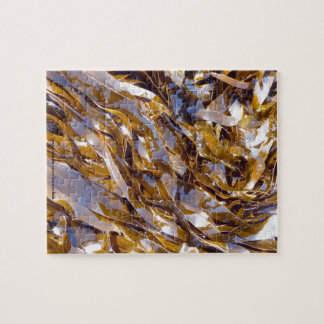 A brown seaweed on the surface of the sea. puzzles