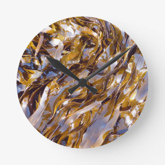 A brown seaweed on the surface of the sea. wallclocks