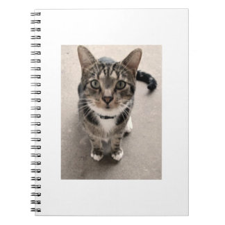 A Cat On A Notebook