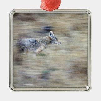 A coyote runs through the hillside blending into christmas ornament