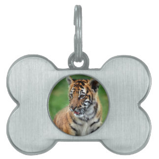 A cute baby tiger pet name tags