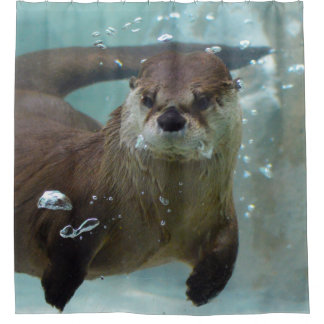 A cute Brown otter swimming in a clear blue pool Shower Curtain