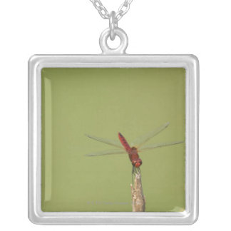 A Dragonfly rests momentarily on a dried weed Silver Plated Necklace