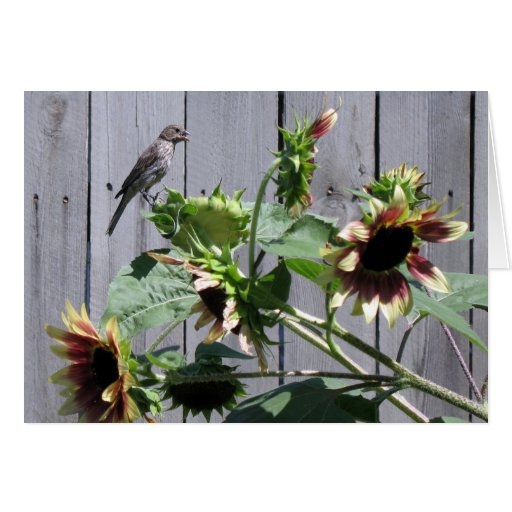 A Feast of Sunflower Seeds Cards