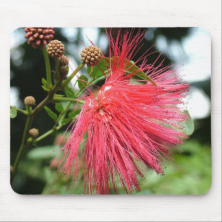 A flower named Phoenix Mouse Pad