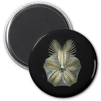 A Fossil Sea Urchin 6 Cm Round Magnet