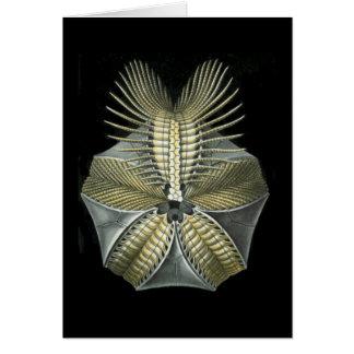 A Fossil Sea Urchin Greeting Card