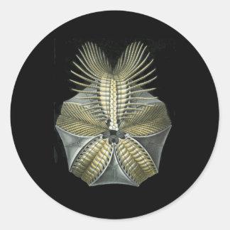 A Fossil Sea Urchin Round Stickers