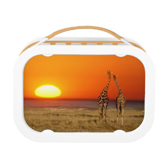 A Giraffe couple walks into the sunset, in Lunch Box