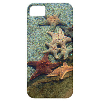 A group of starfish. case for the iPhone 5