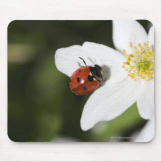 A ladybird on a wood anemone Stockholm Sweden Mouse Pad
