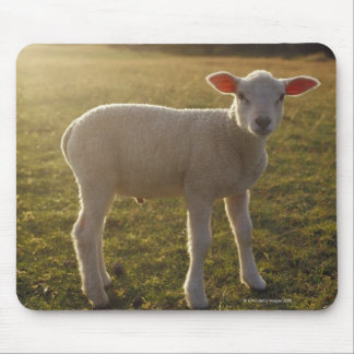 A Lamb at the Setting of the Sun Sweden Mouse Pad
