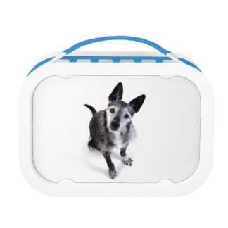 a lot of dogs lunchbox