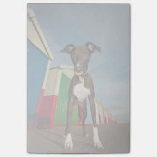 A Lurcher Standing In Front Of Some Beach Huts Post-it Notes