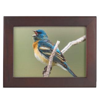 A Male Lazuli Bunting Songbird Singing Keepsake Box