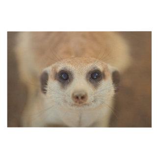 A Meerkat looking up at the camera Wood Print