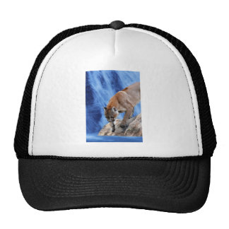 A mountain lion at the waterfall cap
