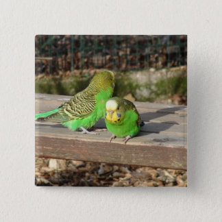 A Pair of Green Budgies on a wooden bench 15 Cm Square Badge