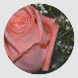 A Peach-Coral Colored Rose Classic Round Sticker