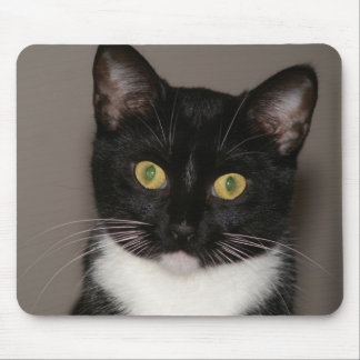 A realy cute cat. mouse pad