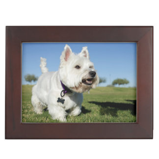 A Terrier playing out in the field Keepsake Box