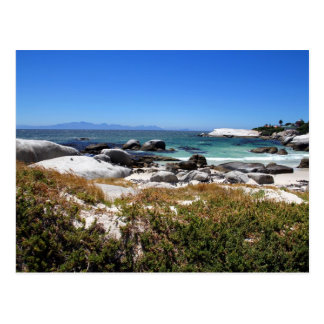 A view of Boulders beach and its famous penguins Postcard