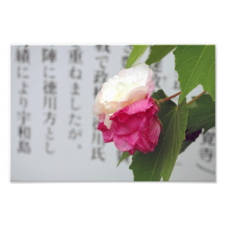 A white, a pink flower and Japanese characters Photo Art