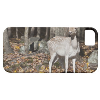 A White-tailed deer (fawn) standing in the iPhone 5 Cover