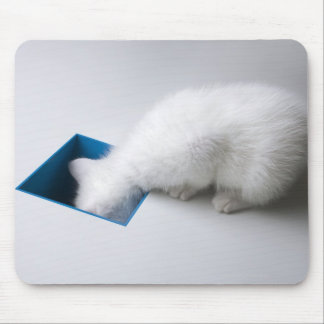 A Young Kitten Stretches His Head Down a Square Mouse Pad