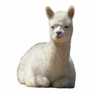 Aah Alpaca Photo Sculpture