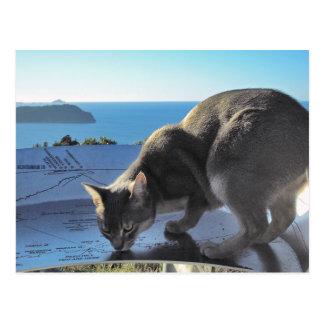 Abyssinian Cat Top of Mount Paku New Zealand Postcard