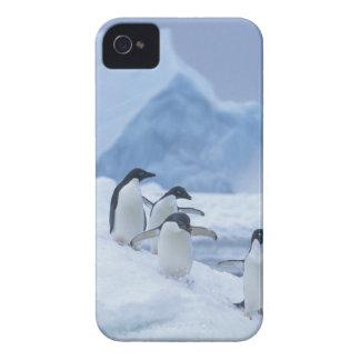 Adelie Penguins (Pygoscelis adeliae) on ice, iPhone 4 Case-Mate Case